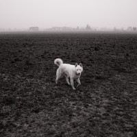 54 · White dog, I