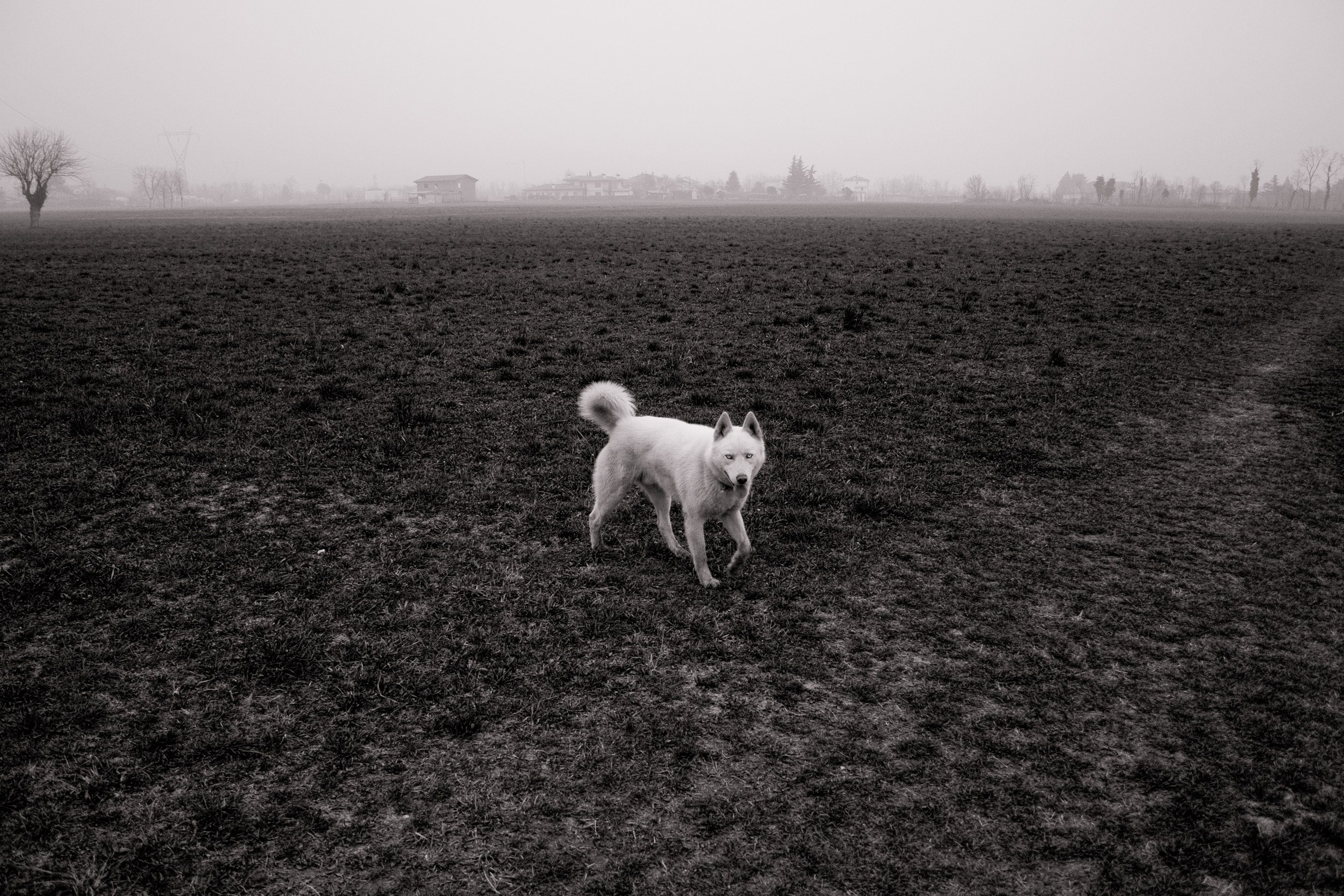 54 · White dog, I Click to view previous post