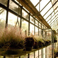 100 · Carnivorous plants greenhouse