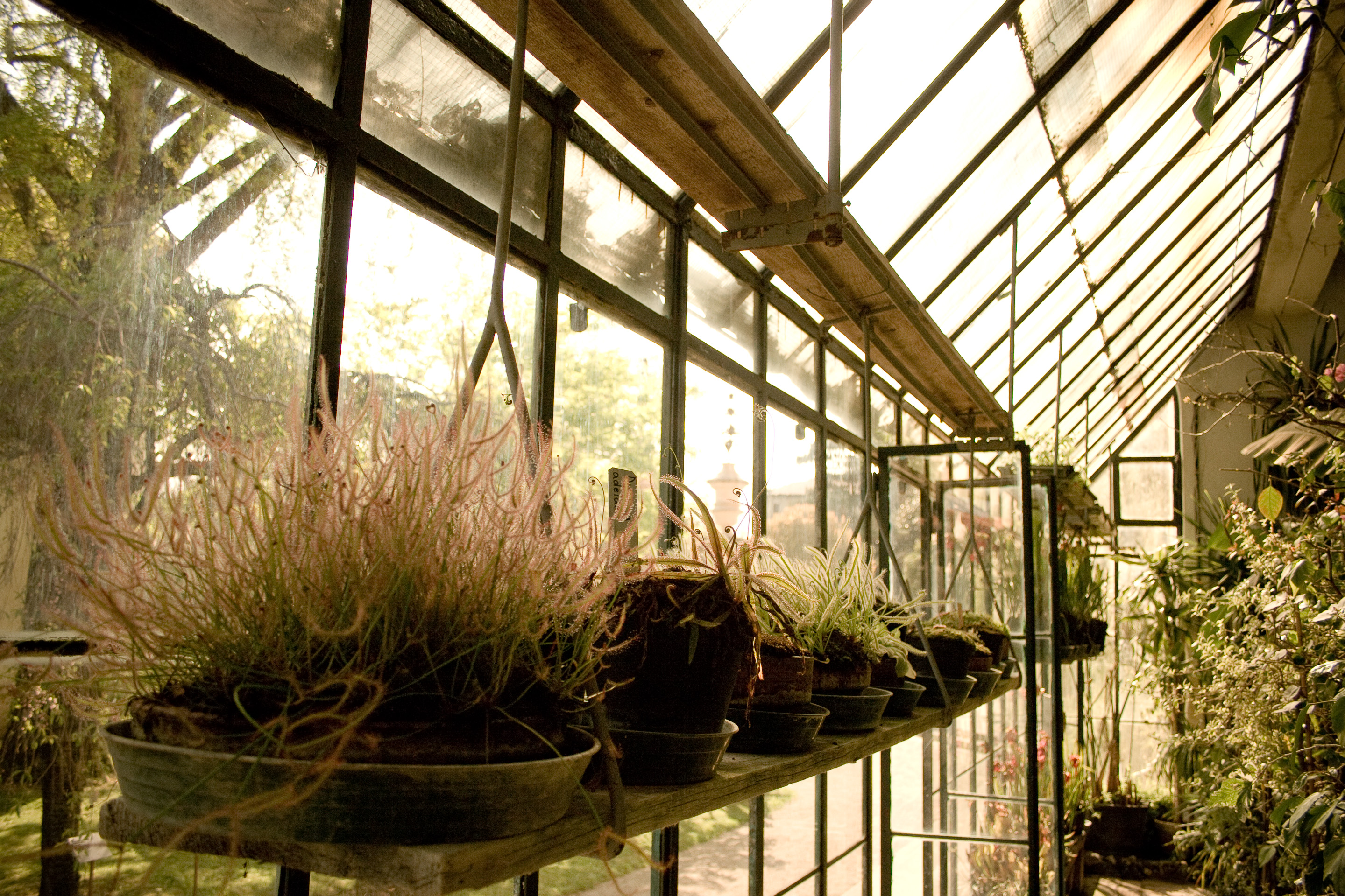 100 · Carnivorous plants greenhouse Click to view previous post