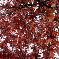 110 · Leaves
