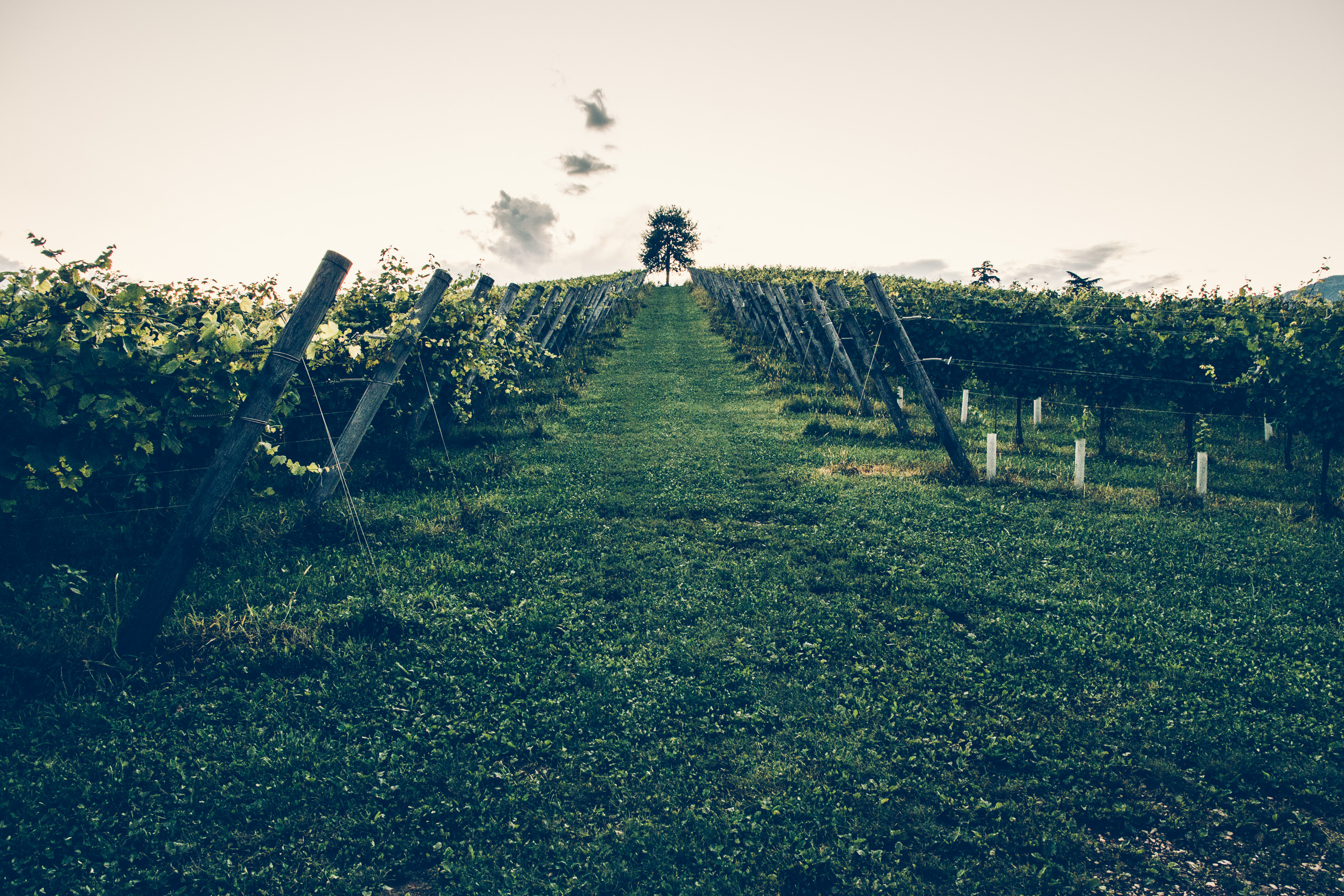 251 · Vineyard Click to view previous post