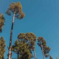 330 · Tall trees